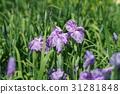 โอมิยะ,ดอกไม้บานเต็มที่,เมฆ 31281848