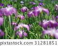 โอมิยะ,ดอกไม้บานเต็มที่,เมฆ 31281851