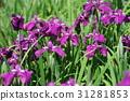 โอมิยะ,ดอกไม้บานเต็มที่,เมฆ 31281853