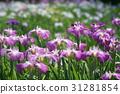 โอมิยะ,ดอกไม้บานเต็มที่,เมฆ 31281854