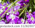 Fresh purple flower with dewdrops closeup.  31282007