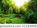 Tropical forest, trees in sunlight and rain 31283898