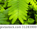 Closeup image of green leaf, background 31283900