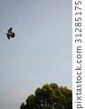 鳩和天空和樹 31285175