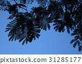藍天和葉子剪影 31285177