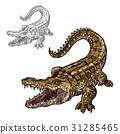 crocodile, alligator, sketch 31285465