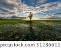 湖泊 湖 景色 31286611