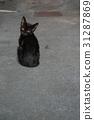 黑貓流浪貓 31287869