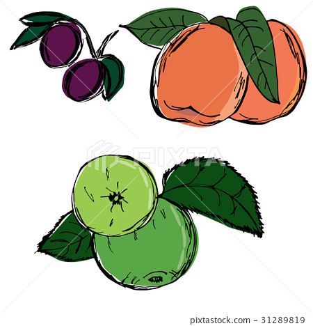 Apple plum peach hand drawn 31289819