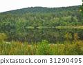 반사, 숲, 호수 31290495