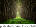 Blurry image of imaginary tree tunnel 31290948