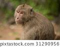 动物 猴子 单个 31290956