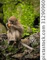 动物 猴子 单个 31290960