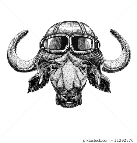 Buffalo, bull, ox wearing leather helmet Aviator 31292570