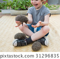 Little boy playing with hedgehog 31296835