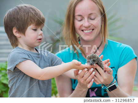 Young woman with son playing with hedgehog baby 31296857
