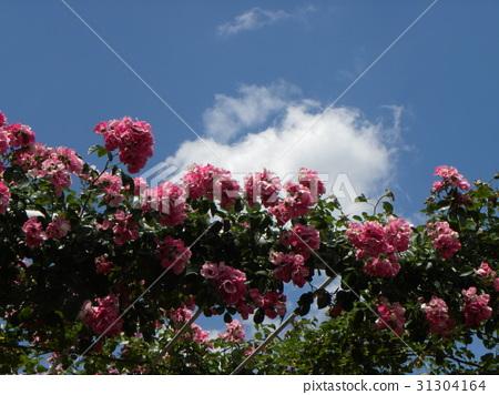 푸른, 하늘, 꽃 31304164