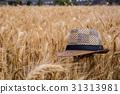 台灣台南學甲麥田Asia Taiwan Tainan wheat field 31313981