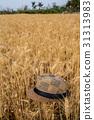 台灣台南學甲麥田Asia Taiwan Tainan wheat field 31313983