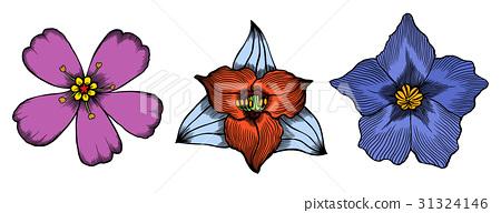 Botanical vector vintage illustration. 31324146