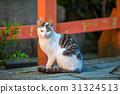 猫 猫咪 小猫 31324513