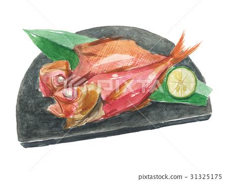漂亮的目鲷 红金眼鲷 红鲷鱼 31325175
