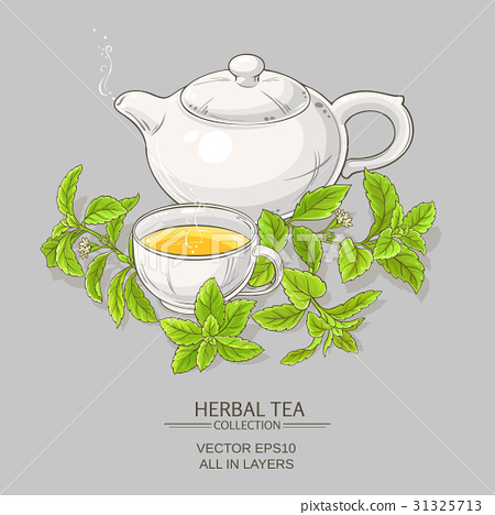 stevia tea illustration 31325713