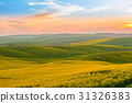 Moravia Hills and Rapeseed Fields 31326383