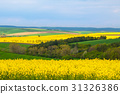 Wheat and Rapeseed Fields of South Moravia 31326386