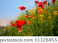 colorful flowers on field 31326855