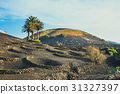 Volcanic landscape of Lanzarote, Canary, Spain 31327397