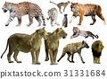 Set of wild mammals isolated over white 31331684