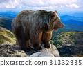 Brown bear 31332335
