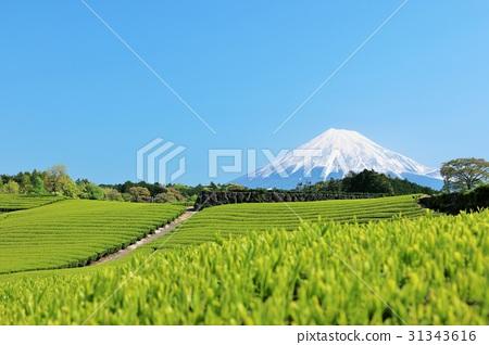 ภูเขาฟูจิ,ภูเขาไฟฟูจิ,พืชสีเขียว 31343616