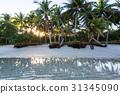 海岸線 島 自然 31345090