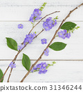 Purple flowers with branch and green leaves 31346244