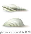 Vector illustration, badges, stickers, seashell in 31348565