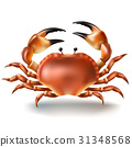 Vector illustration, badges, stickers, crab in 31348568