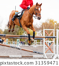 Sorrel horse with rider man jumping over obstacle 31359471