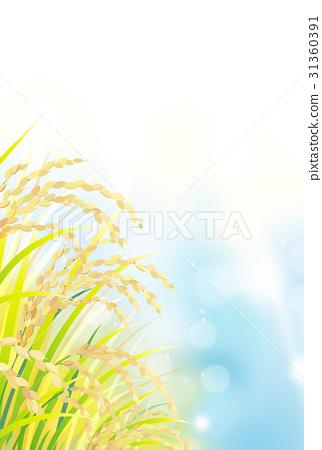 水稻 31360391