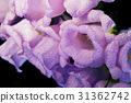 bells pink flowers beautiful background 31362742