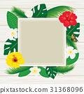 槿 雞蛋花 熱帶 31368096