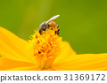 Bees on flower 31369172