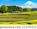 ภูเขาฟูจิ,ภูเขาไฟฟูจิ,ประเทศญี่ปุ่น 31370333