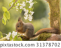 young squirrels tail 31378702