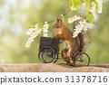 cycle between flowers 31378716