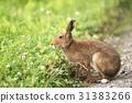 토끼, 야생, 야생 동물 31383266