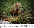 water ibera wild 31383512