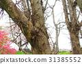 arboreal, roadside trees, wood 31385552