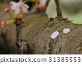 tree, roadside trees, park 31385553